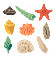 summer tropical objects marine shells in cartoon vector image vector image