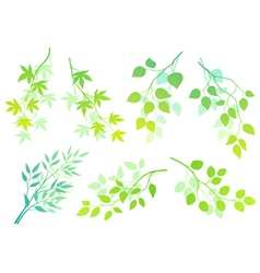 Green branches vector image vector image