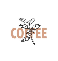 coffee outline branch with text vector image