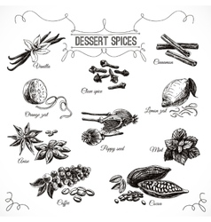 hand drawn set with Dessert Spices vector image