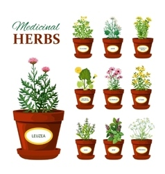 Medical Herbs In Pots With Labels vector