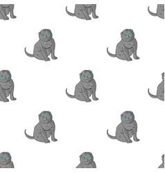 Scottish fold icon in cartoon style isolated on vector