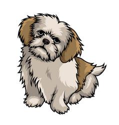 shih tzu dog mascot cartoon vector image