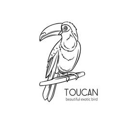 Toucan exotic bird vector