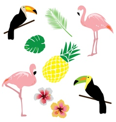 tropical elements vector image vector image