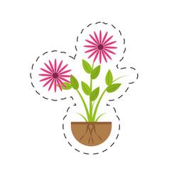 Aster flowers bunch flora growing vector