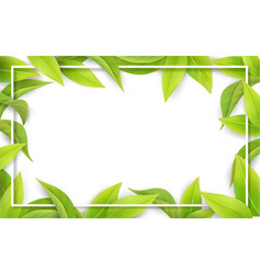 green leaves on white background place for text vector image