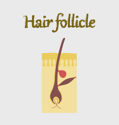 Human organ icon in flat style hair follicles vector