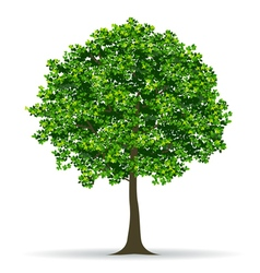 tree and leaf vector image vector image