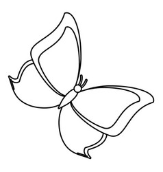 butterfly animal insect fly thin line vector image