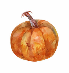 ripe brown pumpkin watercolor painting side view vector image