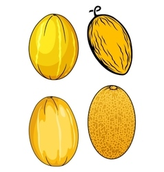 Ripe isolated yellow melon fruits vector