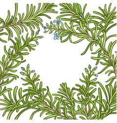 rosemary branch pattern vector image