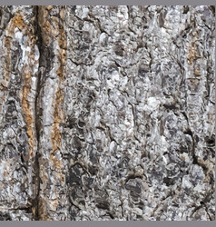 Seamless texture of a bark of a trunk of a spruce vector