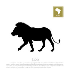 black lion silhouette on white background vector image