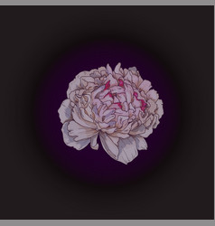 Hand drawn gently pink peony bud isolated vector