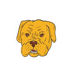 bordeaux dog head cartoon vector image vector image