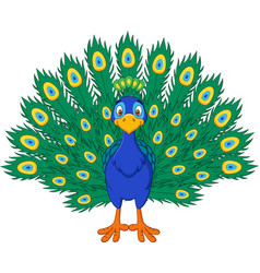 cartoon beautiful peacock vector image