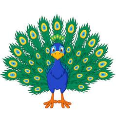 Cartoon beautiful peacock vector