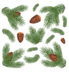 Green lush spruce branch vector