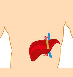 Liver in tele person vector