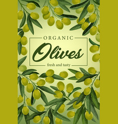 Olives on branches green fruits and leaves vector