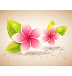 Peaceful and relaxing card with spa flowers vector image