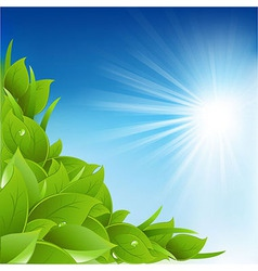 Nature Background With Leafs vector image vector image