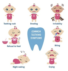 Baby teething symptoms vector