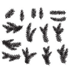 collection set of realistic fir branches vector image