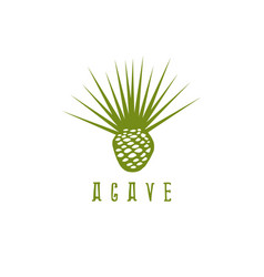 Design template agave root and leaves vector