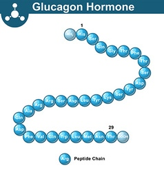 Glucagon hormone chemical structure vector image