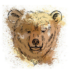 sketch bear head on the colored background vector image