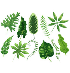 tropical leaves exotic tropic leaf botanic vector image