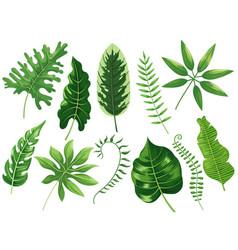 tropical leaves exotic tropic leaf botanic vector image