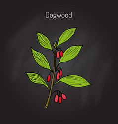Branch of dogwood pla vector