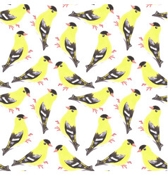 American goldfinch or spinus tristis bird vector