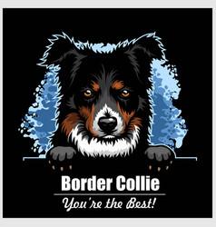 border collie - peeking dogs - breed face head vector image
