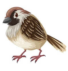 Little sparrow with brown feather vector image