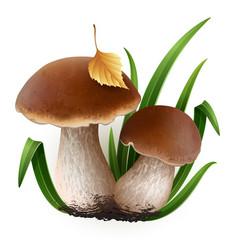 porcini mushrooms vector image