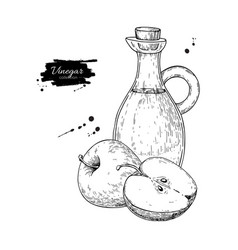 apple vinegar drawing hand draw vector image