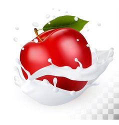 Red apple in a milk splash on a transparent vector image