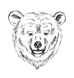 sketch pen a bear head vector image