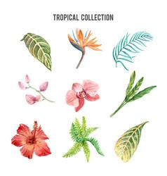 tropical plant watercolor design element vector image