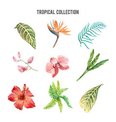 Tropical plant watercolor design element with vector