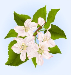 Twig of apple tree with flowers vector image vector image