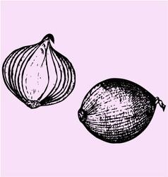 Bulb onion vector