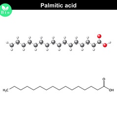 Palmitic acid molecule vector