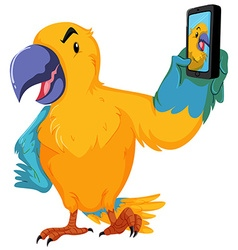 Parrot taking picture with cellphone vector image