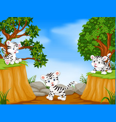 three tiger with mountain cliff scene vector image